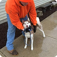 Adopt A Pet :: Havanna - Quincy, IN
