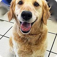 Adopt A Pet :: Ursa - BIRMINGHAM, AL
