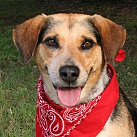 Adopt A Pet :: Ginnie - Pipe Creed, TX