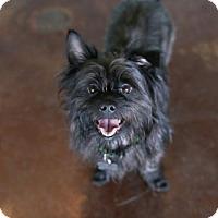 Adopt A Pet :: Tarzan - San Antonio, TX