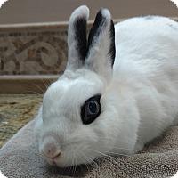 Adopt A Pet :: Adora - Williston, FL