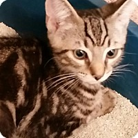 Adopt A Pet :: Fernon - Philadelphia, PA