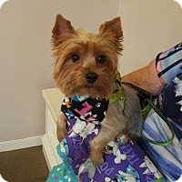 Adopt A Pet :: Laurie - Conroe, TX