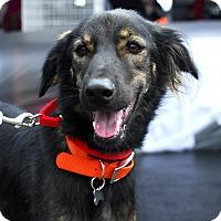 Adopt A Pet :: Ash-Adopted! - Detroit, MI