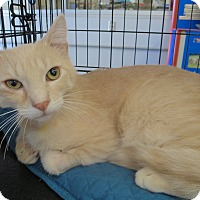 Adopt A Pet :: Butters - Fort Wayne, IN