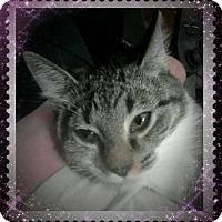 Adopt A Pet :: Suduko - Trevose, PA