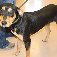 Adopt A Pet :: Baby Girl - Mineral Wells, TX