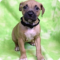 Adopt A Pet :: JIMMY - Westminster, CO