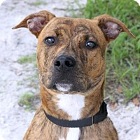 Adopt A Pet :: Dude - Loxahatchee, FL