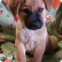 Adopt A Pet :: Frances - Los Angeles, CA