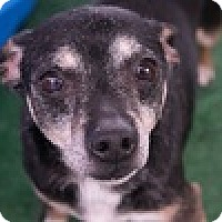Adopt A Pet :: Andrew McFarlane - Reno, NV
