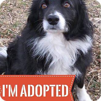 Border Collie Mix Dog for adoption in Regina, Saskatchewan - Skippy