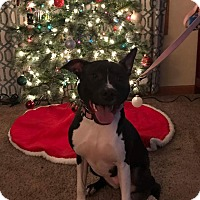 Adopt A Pet :: Sophie - Huntington, IN