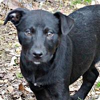 Adopt A Pet :: Cecily - Glastonbury, CT