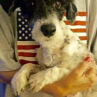 Adopt A Pet :: SHELBY - Colton, CA
