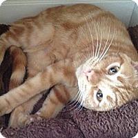 Adopt A Pet :: Gilligan - Byron Center, MI