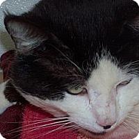 Adopt A Pet :: Arthur - El Cajon, CA