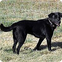 Adopt A Pet :: Magpie - Saskatoon, SK