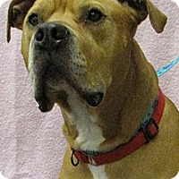 Adopt A Pet :: Tyson - Seattle, WA