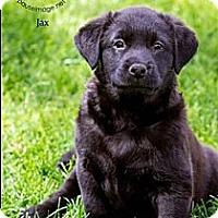 Adopt A Pet :: Jomax (Jax) - Scottsdale, AZ