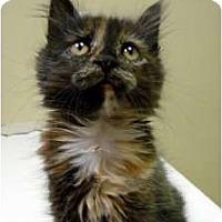 Adopt A Pet :: Bizee - Chicago, IL