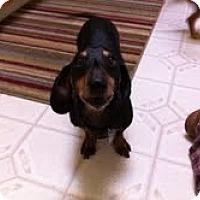 Adopt A Pet :: SIDNEY - Portland, OR