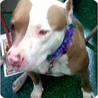 Adopt A Pet :: Sammy - Fowler, CA