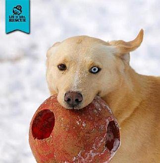 Labrador Retriever Mix Dog for adoption in Temple, Georgia - Mason