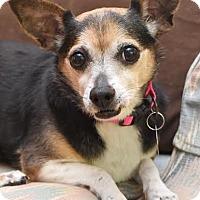 Adopt A Pet :: Lily - Hamburg, PA