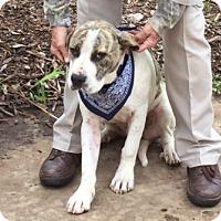 Adopt A Pet :: Gordo - McLoud, OK
