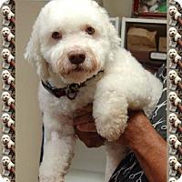 Adopt A Pet :: Adopted!!Dixon - S. TX - Tulsa, OK