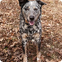 Adopt A Pet :: Riggs - Richmond, VA