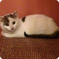 Adopt A Pet :: Michonne - Horsham, PA