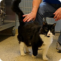 Adopt A Pet :: Itsy - Scituate, MA