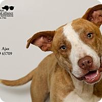 Adopt A Pet :: Ajax - Baton Rouge, LA