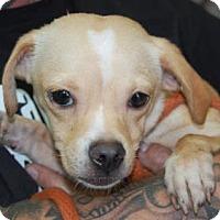 Adopt A Pet :: Tybee - Brooklyn, NY