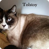 Adopt A Pet :: Tolstoy - Lakewood, CO