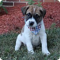Adopt A Pet :: Elmer - New Oxford, PA