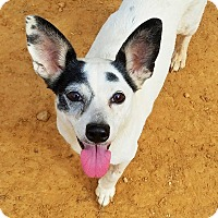 Adopt A Pet :: Fiona - Kingston, TN