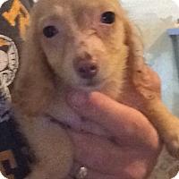 Adopt A Pet :: Deli - St Louis, MO