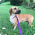 Adopt A Pet :: Bessie (Reduced Fee)