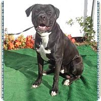 Adopt A Pet :: BRODY - Marietta, GA