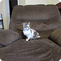 Adopt A Pet :: Butterfinger - Hazard, KY