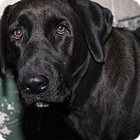 Adopt A Pet :: Kiya - Marietta, OH