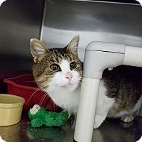 Adopt A Pet :: Wiley - Elyria, OH