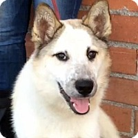 Adopt A Pet :: BOSTON (video) - Los Angeles, CA