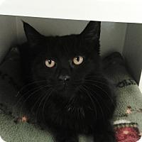 Adopt A Pet :: Storm - Cloquet, MN