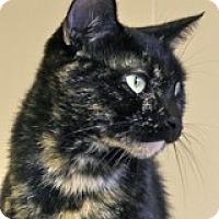 Adopt A Pet :: Xena - Atlanta, GA