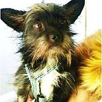 Adopt A Pet :: Fischer - Mission Viejo, CA