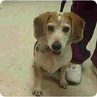 Adopt A Pet :: Moober - Phoenix, AZ